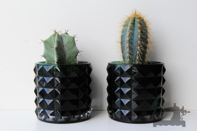 cactusi.jpg