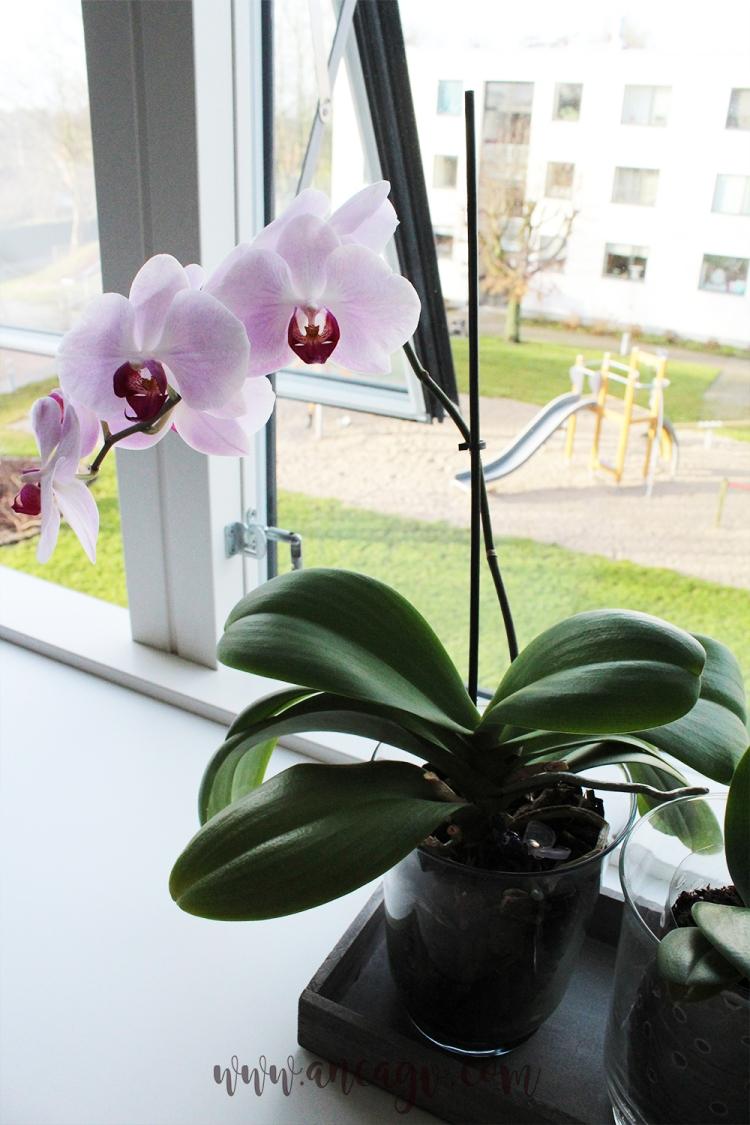 orhidee5