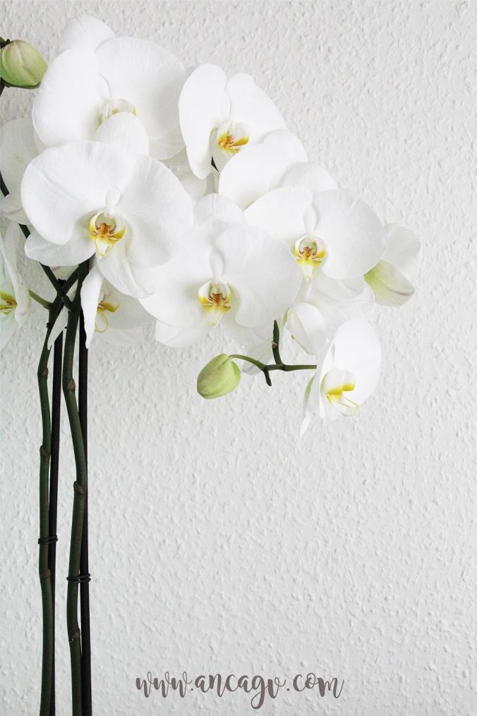 orhidee7