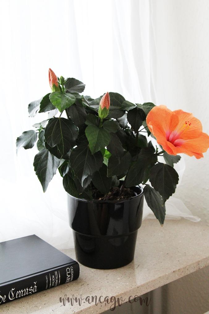 orhidee8