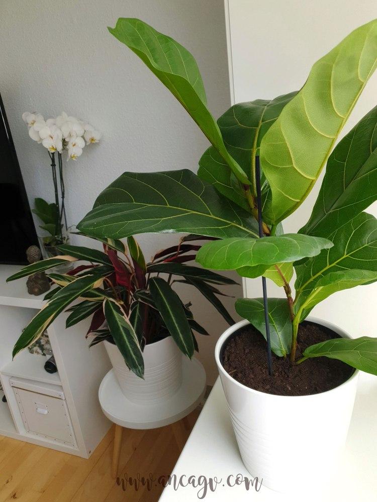 plante-3