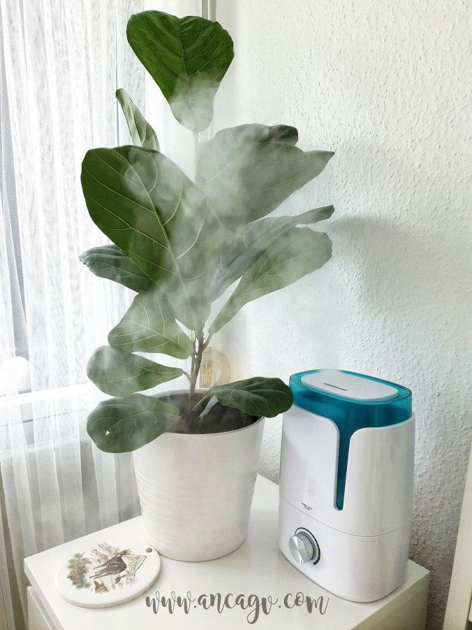 ingrijirea-plantelor1