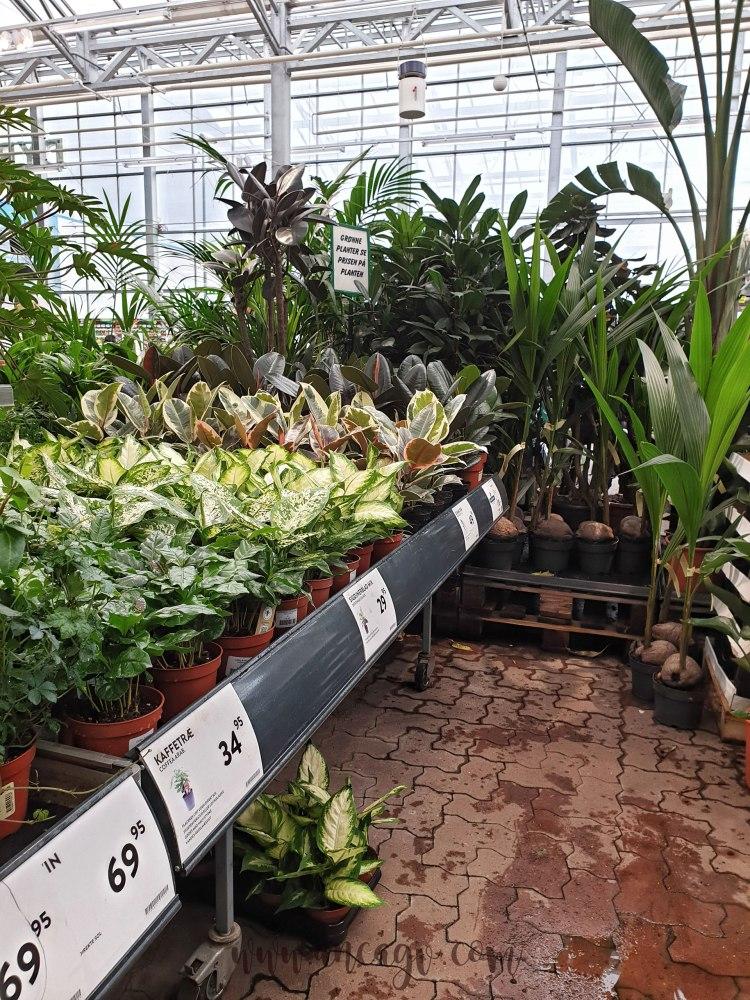 ingrijirea-plantelor2